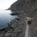 Ras Abu Gallum trail, Sinai