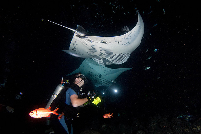 night diving with giant manta rays, travel bucket list