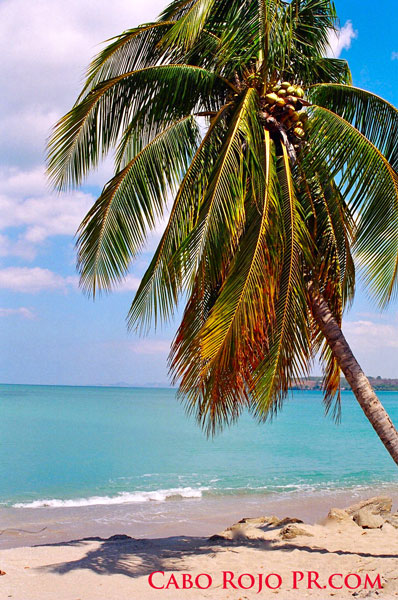 cabo rojo hispanic singles Free to join & browse - 1000's of latino men in cabo rojo, puerto rico - interracial dating, relationships & marriage with guys & males online.